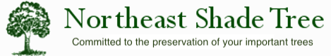 Northeast Shade Tree Logo